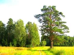 Святозарово